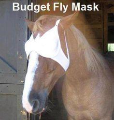 Wenn die Fliegenmasken zu teuer sind, tut's auch ein BH!