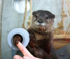 This Japanese marine park offers chance to shake hands with an otter. WITH AN OTTER.