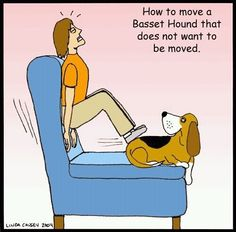 how to move a basset hound