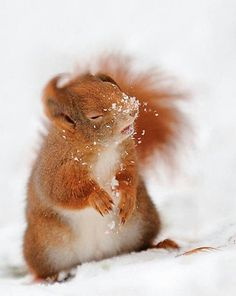 This is like the red squirrels at Formby Point