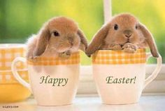 Baby Bunnies In Tea Cups for the children from the Easter Bunny! Funny Bunnies, Baby Bunnies, Cute Bunny, Easter Bunny, Bunny Rabbits, Adorable Bunnies, Bunny Pics, Bunny Bunny, Bunny Meme