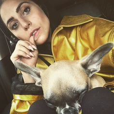 Pin for Later: Adorable Pictures of Celebrities and Their Favorite Furry Friends Lady Gaga