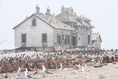 14 lieux abandonnés investis par les animaux, quand la nature reprend ses droits