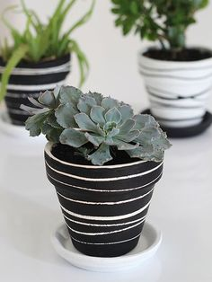 DIY how to paint terra cotta pots tips and tutorial. I used chalk paint to give my clay pot a modern but simple rainbow ombre design. Plus ideas for other ways to paint terracotta by hand. Perfect for holding succulents Painted Plant Pots, Painted Flower Pots, Decorated Flower Pots, Clay Flower Pots, Pots D'argile, Fleurs Diy, Pot Plante, Clay Pot Crafts, Easy Crafts