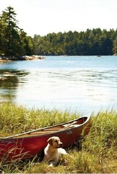 Dog waiting for a canoe ride on the lake