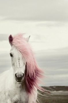horse ♕ Pink • White