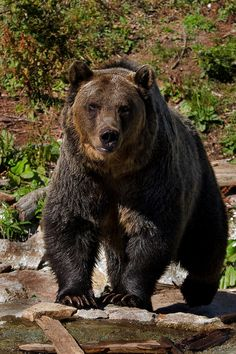 I'm sorry, but I absolutely love bears!!! They's adorable!!!!