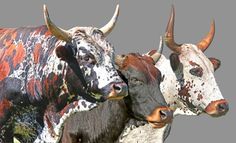 Beautiful art of Nguni cows! Ngunis are a type of cattle from South Africa with which were are fascinated. The paintings of Nguni cattle is just outstanding.