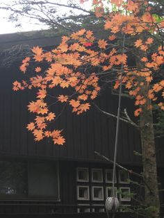 Autumn in Nikko, Japan