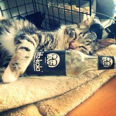 Fritz'Kola <3 Fritz Kola, Smart Water, Water Bottle, Drinks, Instagram, Nice, Lemonade, Advertising, Drinking