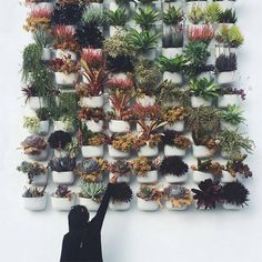 "9,722 Likes, 92 Comments - Urban Jungle Bloggers™ (@urbanjungleblog) on Instagram: ""Which one would you pick? 🌿🌴🌵🍀🌱 📷:@secretsucculentzz wall design by @tendliving for @shoppigment…"""