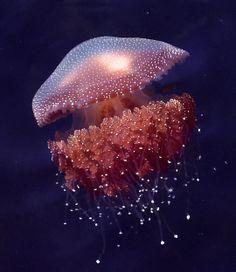 Jellyfish ✿ #ocean life