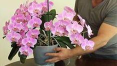 Geniální rady jak správně pečovat o orchidej! Úžasné výsledky – pokvete jako nikdy předtím! | Vychytávkov Plants, Tulips, Cactus, Plant, Planets