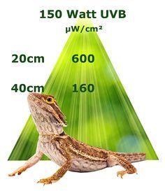 Für sonnenliebende Reptilien wie Bartagamen benötigt man sehr gut UVB Lampen im Terrarium. UVB Beleuchtung ist für die Vitamin D3 extrem wichtig. Damit werden Erkrankungen wie Rachitis verhindert. Hier ist die UVB Strahlung bei der 150 Watt Metalldampflampe / Spotstrahler oder HQI Lampe abgebildet. Vitamin D3, Animals, Iguanas, Terrariums, Reptiles, Lighting, Animales, Animaux, Animais