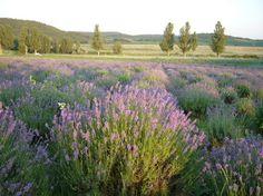 . Vineyard, Mountains, Nature, Travel, Outdoor, Beautiful, Outdoors, Naturaleza, Viajes