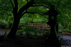 """Ent"" and stone lantern - Kyoto 