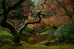 Portland Japanese Garden ~ Oregon