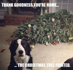Christmas tree mishaps