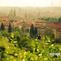 Early morning in the vineyards of Malá Strana in Prague, Czech Republic.