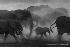 Zimbabwe, Elephants in the Dust Part II. | The Daily Pic(k)ture
