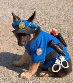 How To Make A Dog Costume - Halloween costumes for dogs Pet Halloween Costumes, Pet Costumes, Dog Halloween, Costume Ideas, Animal Costumes, Chien Halloween, Funny Puppy Pictures, Police Dogs, Cop Dog