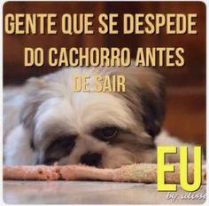 EU!!! ☝️☝️☝️ #maedepet #filhode4patas #cachorro #petmeupet #amoanimais #maedecachorro #paidecachorro #cachorroehtudodebom #cachorroterapia #caopanheiro #caopanhia
