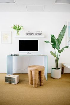 Contemporary Minimalist Furniture: Tall potted plant and white desk in a modern workspace.
