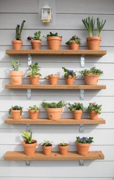 DIY Plant Wall. This would be so fun to do with potted herbs.