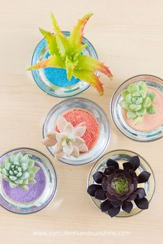 Create your own fun succulent and sand centerpieces!