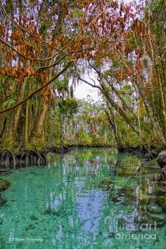 Three Sisters Springs Florida | Fall Colors Along Three Sisters Spring Run Photograph - Fall Colors ...