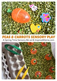 Cute Peas and Carrots Sensory Play - Perfect for Spring or Easter - at B-Inspired Mama Toddler Learning Activities, Sensory Activities, Sensory Play, Fun Learning, Kindergarten Sensory, Preschool Science, Preschool Classroom, Sensory Boxes, Sensory Table