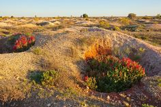 Old Opal Mines, White Cliffs by David Foster Photos, via Flickr   #opal #landscapes  #mining