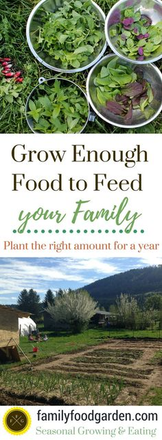 Can you Grow Enough Food to Feed a Family? - Family Food Garden