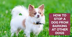How to stop a dog from barking at other dogs on walks.