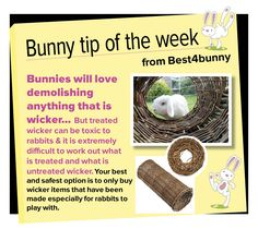 Bunny tip - week 23 Only give bunnies untreated wicker products.  Find some wicker bunny products here http://best4bunny.com/productcat/fun-things/ For overseas visit here http://astore.amazon.com/best4bunny-20?node=5&page=1