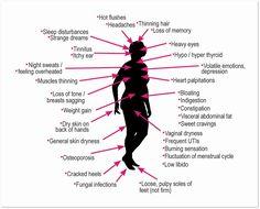 Menopausal Diet