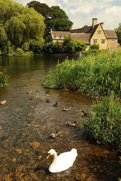 Fairford, a small town in the Cotswolds, on the River Coln, Gloucestershire, England. Wallpaper Paisajes, Beautiful World, Beautiful Places, Nature Landscape, English Village, British Countryside, England And Scotland, Swans, Country Life
