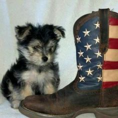 FLAG BOOT Flag, Ankle, Boots, Crotch Boots, Wall Plug, Shoe Boot, Science, Flags