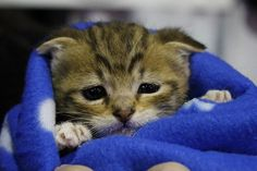 So cute! http://catpictures24.com/cute-little-cat/ #BabyCat, #BabyCats, #CuteCat, #LittleCat, #LittleCats, #SmallCat