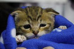 So cute! http://catpictures24.com/cute-little-cat/ #BabyCat, #BabyCats, #CuteCat, #LittleCat, #LittleCats, #SmallCat