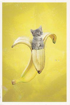 Kitten in a banana