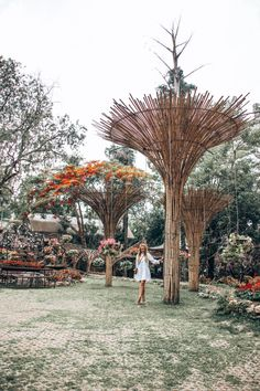 Perhaps you've heard of the Gardens, but have you heard about the Arboretum? These beautiful Chiang Rai attractions started with drug trade! Beautiful Flowers Garden, Beautiful Gardens, International Drivers Licence, Acts Of Love, Chiang Rai, Tree Tops, Thailand Travel, Southeast Asia, The Locals