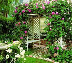 Вьющиеся растения для сада: многолетние и однолетние цветы для дачи