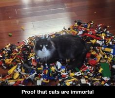 Check out: Animal Memes - Cats are immortal. One of our funny daily memes selection. We add new funny memes everyday! Bookmark us today and enjoy some slapstick entertainment! Funny Cute, Haha Funny, Funny Memes, Lol, Funny Stuff, Funny Things, Freaking Hilarious, Cat Memes, Awesome Stuff