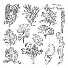 Sketch Underwater Drawing - Marine Sketch With Different Underwater Plants Plant Sketches Underwater Sketch Images Stock Photos Vectors Shutterstock Shipwreck Sketch Above Water . Underwater Drawing, Underwater Plants, Underwater Sea, Underwater Cartoon, Sea Drawing, Plant Drawing, Animal Sketches, Animal Drawings, Sea Flowers