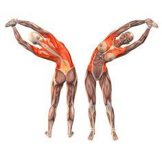 Wrist-grab left bend - Utthita Konasana left - Yoga Poses | YOGA.com