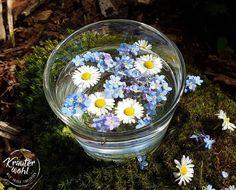 Morgenstund hat Gold im Mund 😊 Und mit einem frischen Blütentee ist der Start in den Tag  noch schöner 🌼💚🍀 #morgenstund #tee #blütentee #gänseblümchen #vergissmeinnicht #blütenzauber #kräuterwohl #kräuterhexe #kräuterpädagoge #wildpflanzen #heilpflanzen #heilkräuter #wildkräuter #wiesenkräuter #essbarewildpflanzen #ewilpa #ernährungstrainer #querdenker #frischundfrei #bellisperennis Kraut, Snow Globes, Gold, Home Decor, Medicinal Plants, Nice Asses, Decoration Home, Room Decor, Home Interior Design