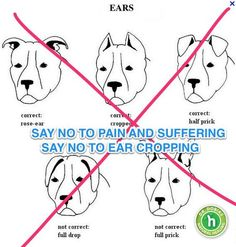 SAY NO TO EAR CROPPING