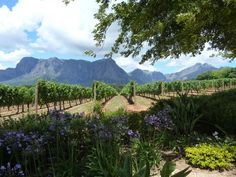 Delaire Graff Estate, Stellenbosch Winery, South Africa Wanderlust Travel, See It, South Africa, To Go, Explore, Places, Outdoor, Outdoors, Wanderlust