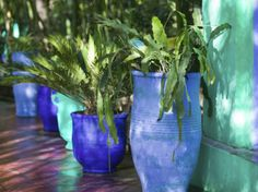 Jardin Majorelle and Museum of Islamic Art, Villa Pottery, Marrakech, Morocco Photographic Print by Walter Bibikow Aquaponics Diy, Aquaponics System, Moroccan Garden, Mexican Garden, Front Yard Decor, Blue Garden, Garden Art, Marrakech Morocco, Small Gardens